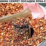 Бабушкин секрет посадки лука -севка
