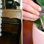 Невероятно! Всего одна деталь в уходе за орхидеями обеспечит их постоянное цветение! Все дело в особом виде подкормки!