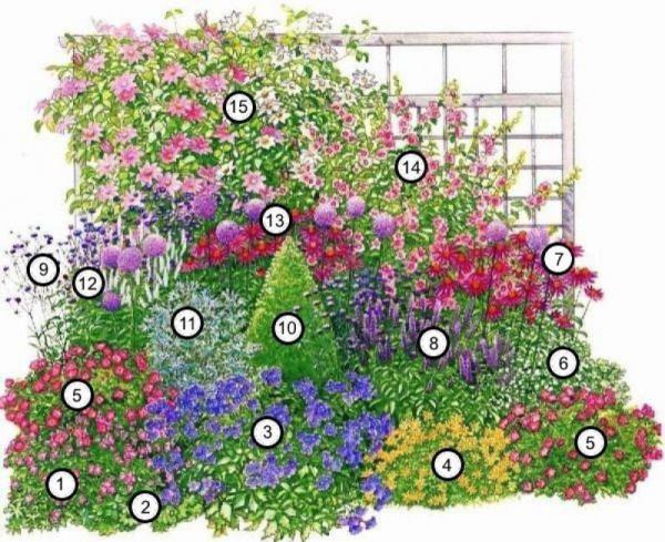 Кусты для сада: выбираем зимостойкие растения 6