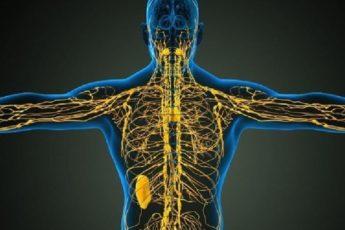 Лимфостимуляция по Костерову: оздоравливает тело и укрепляет иммунитет 1