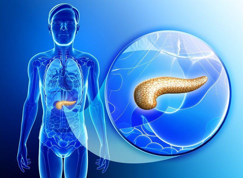 male-pancreas-anatomy